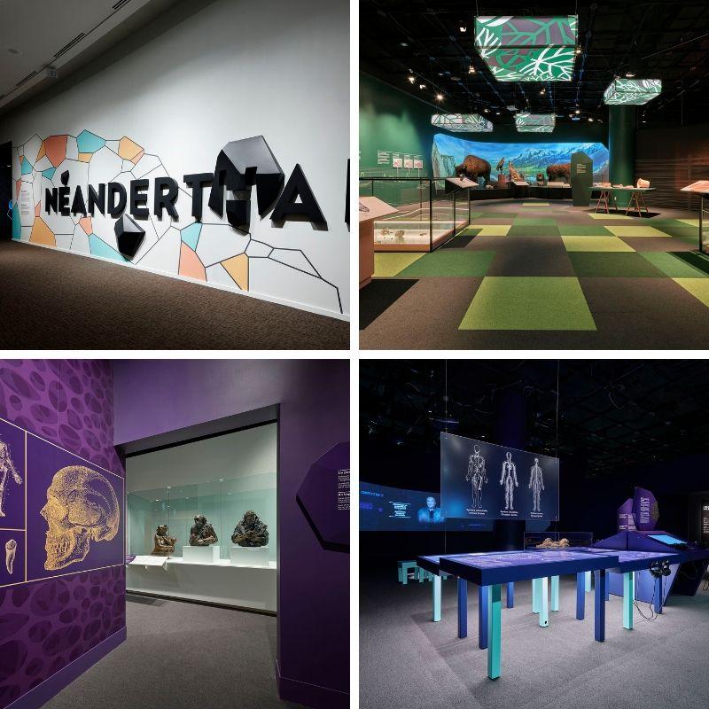 Vues de l'exposition Néandertal.