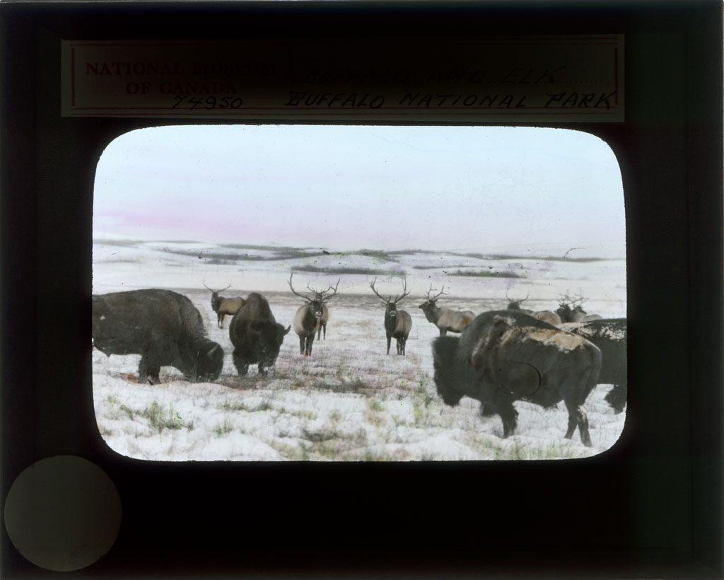 Parc national de Wood Buffalo