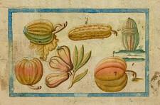 Des melons et des courges. Planche 45 du Bref Discours…