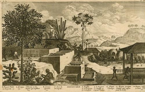 Indigoterie, 1667 par Jean Baptiste Du Tertre