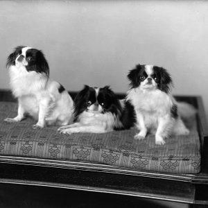 Les chiens de Mme McGill