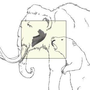 Mâchoire de mammouth et incisive de castor