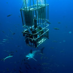 Une plongée en cage