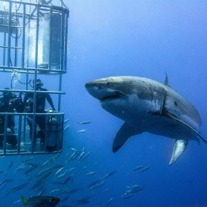 Un profonde plongée en cage
