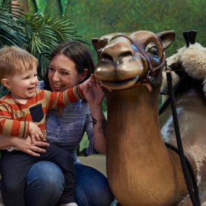 Caressant le chameau